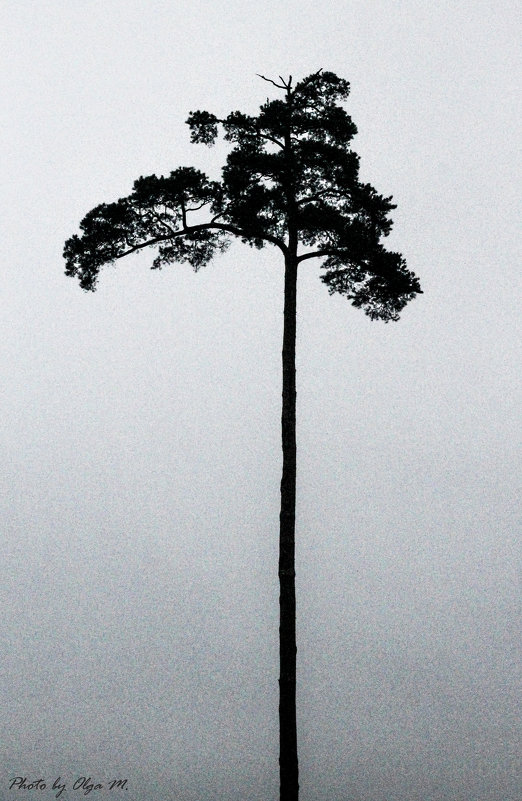 Одиночество - Ольга Мансурова
