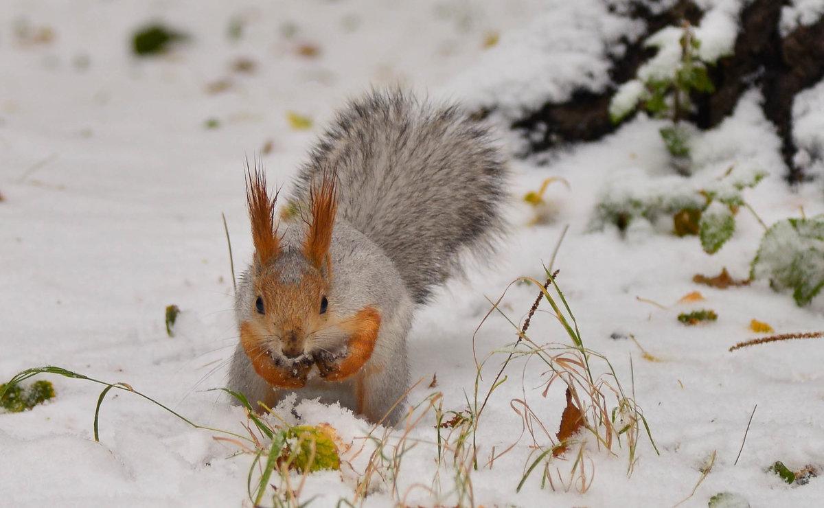 С первым снегом! - cfysx