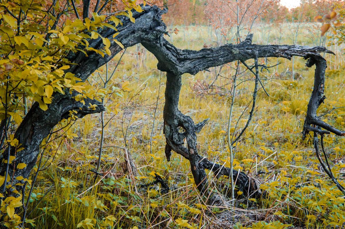 Осень - Арина