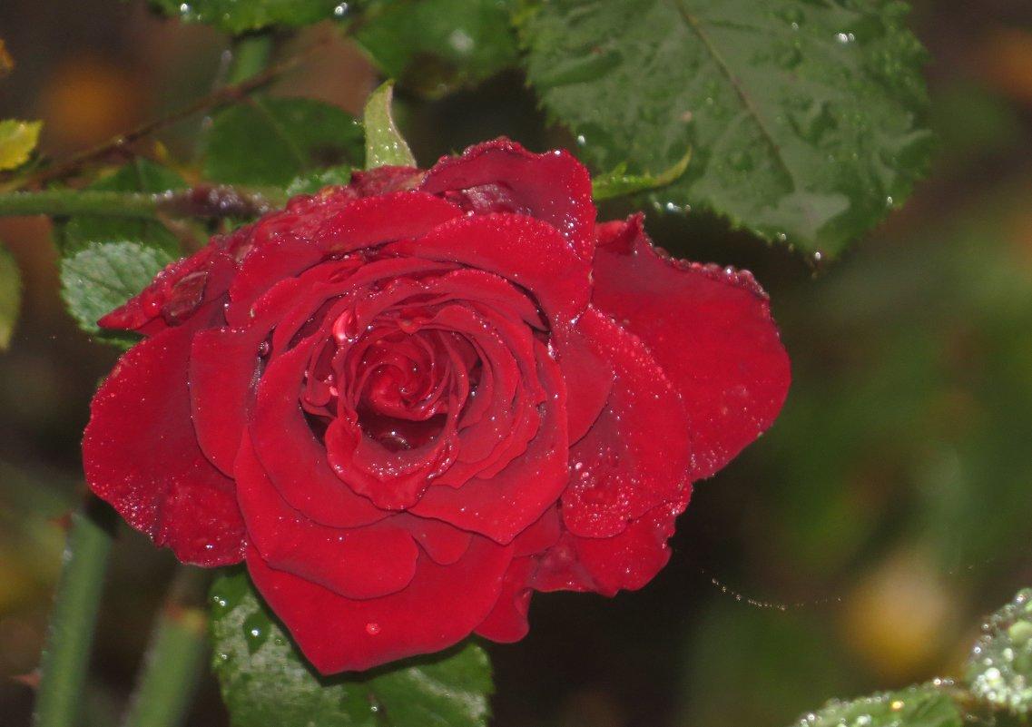 красный октябрь.. - валя