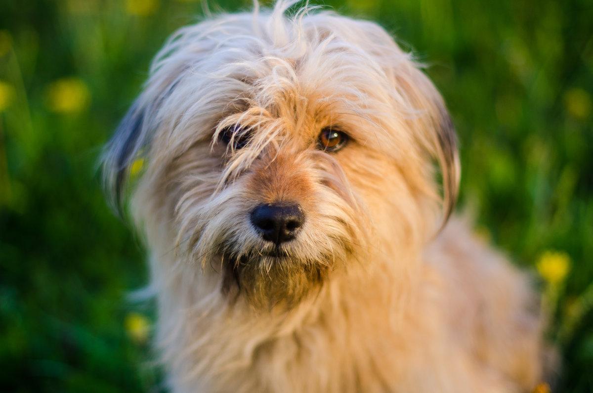 Собака в поле - Юлия Михайлычева