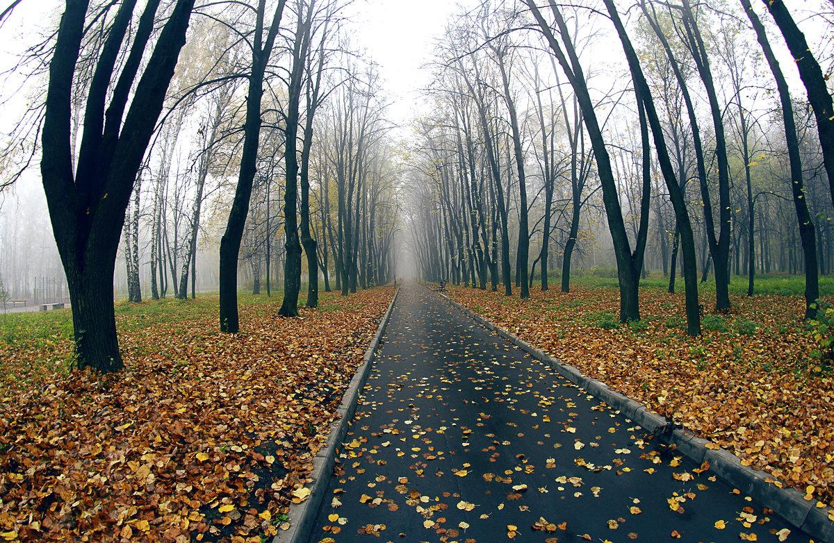 осень в парке - Вадим Виловатый