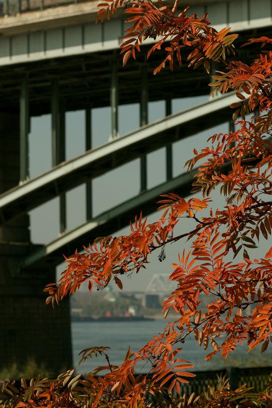 Осень в городе - Ольга