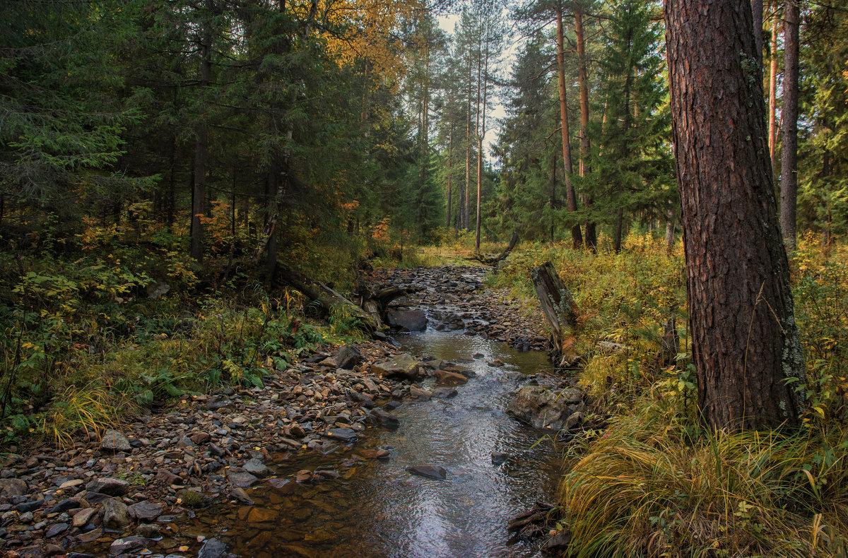 Осенний этюд - vladimir