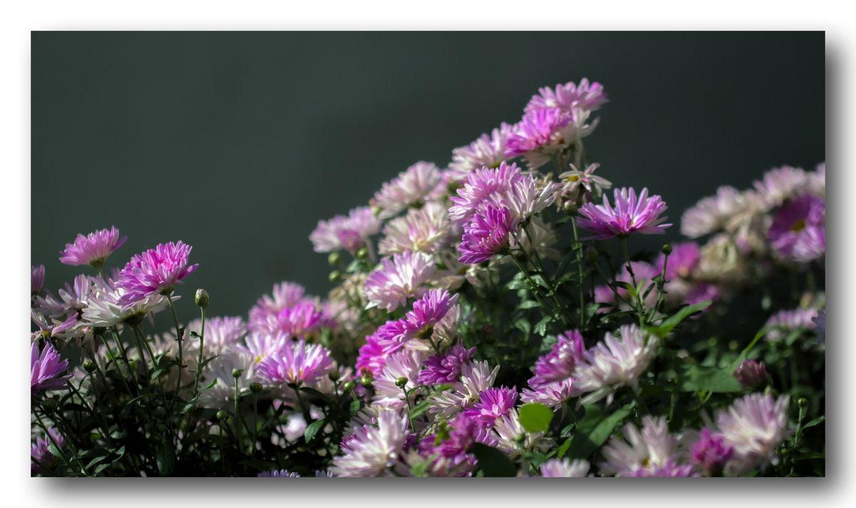 цветочный эскиз - gribushko грибушко Николай