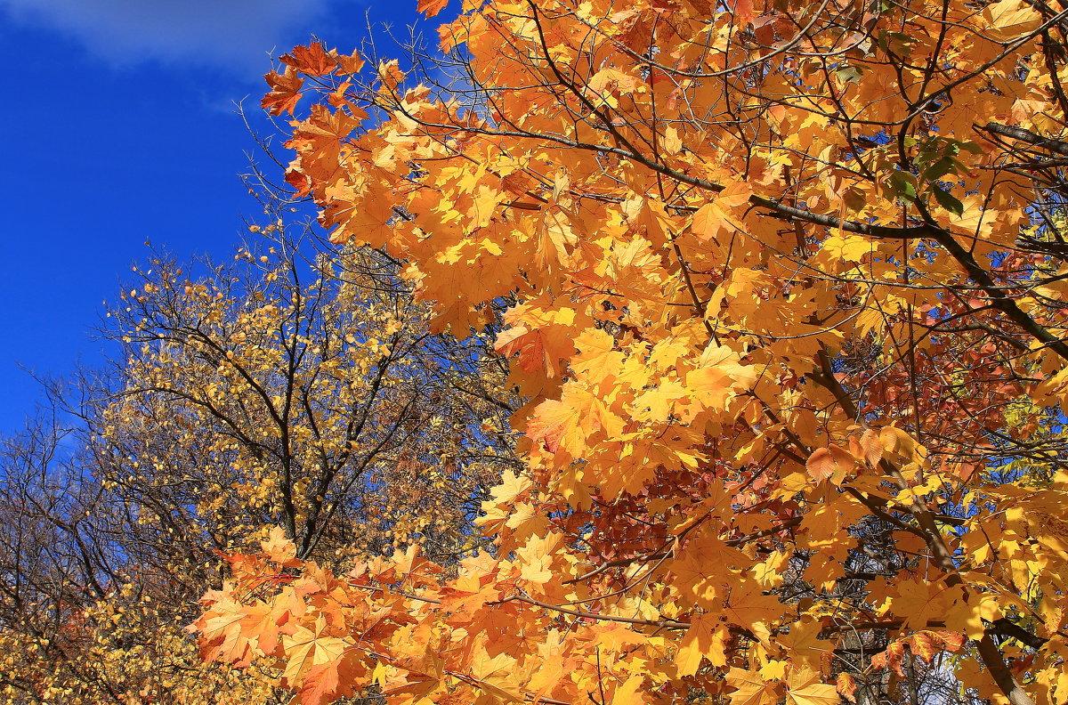 Осеннее золото - Татьяна Ломтева