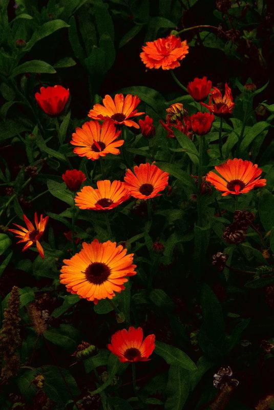 Осенние цветы - Арсений Корицкий