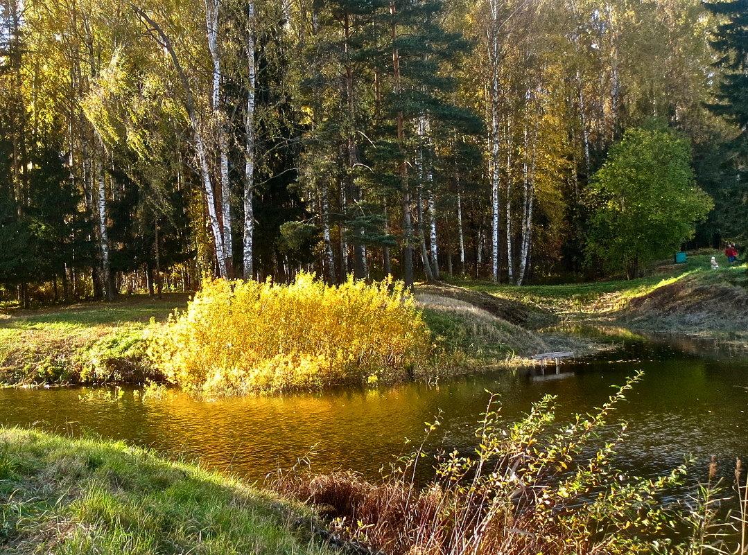 золотой куст - Елена