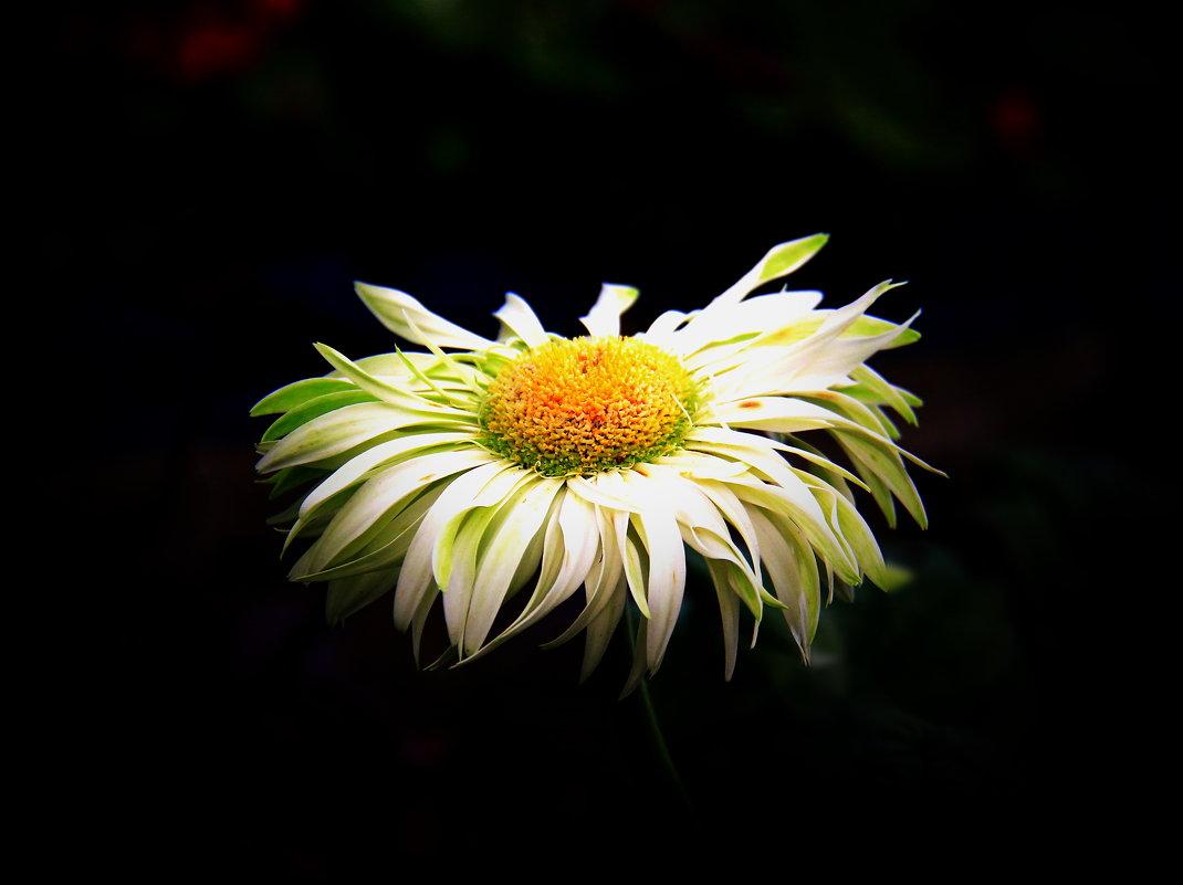 Цветок повисший во мраке - Николай Волков