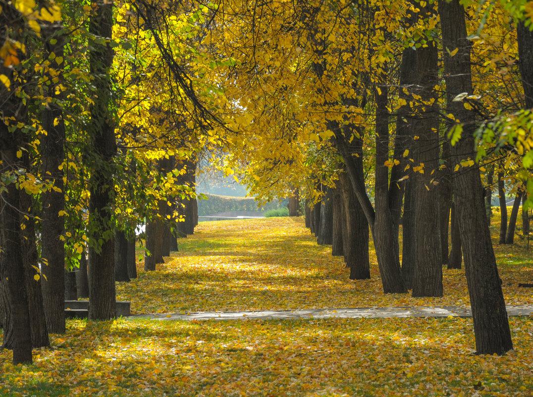 Аллея из желтых листьев в парке - Сергей Тагиров