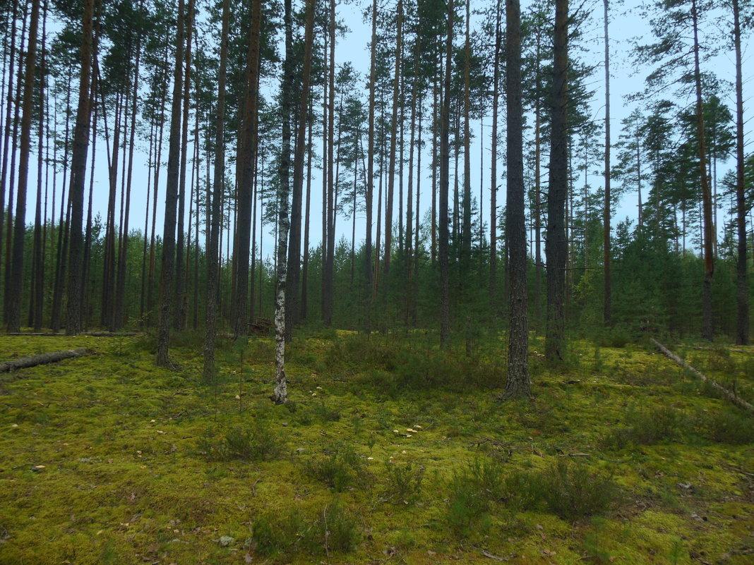 В лесу - Татьяна