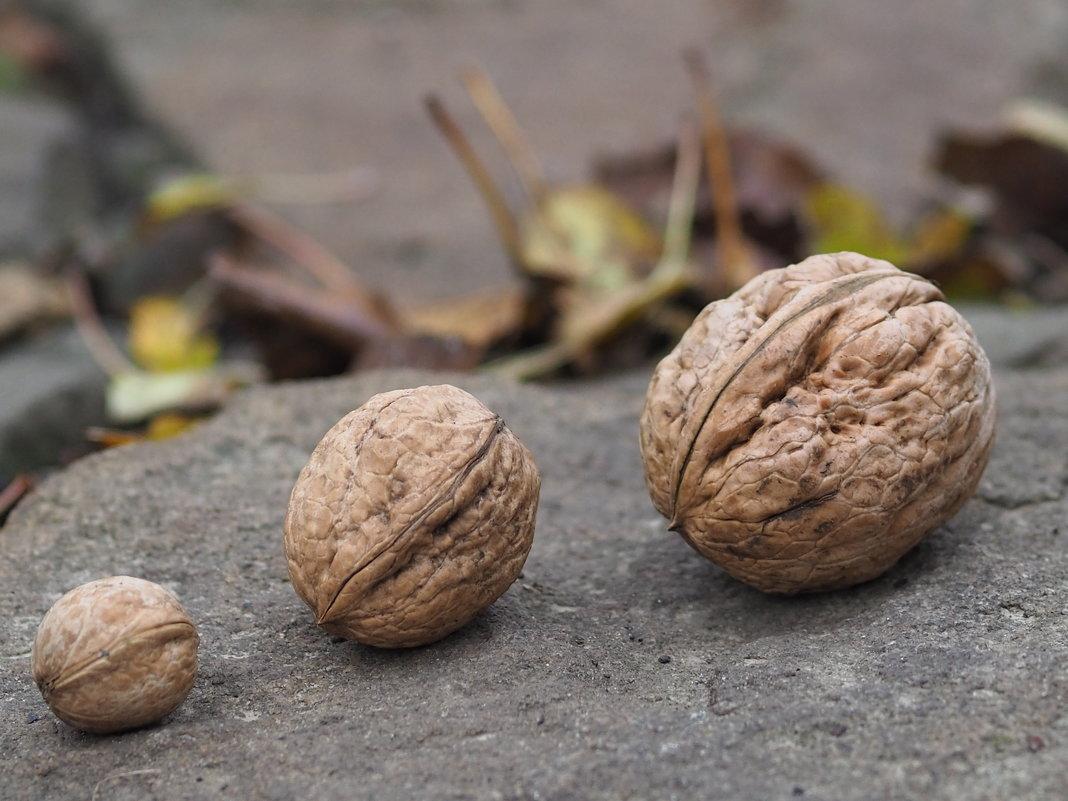 Грецкие орешки - Игорь Касьяненко