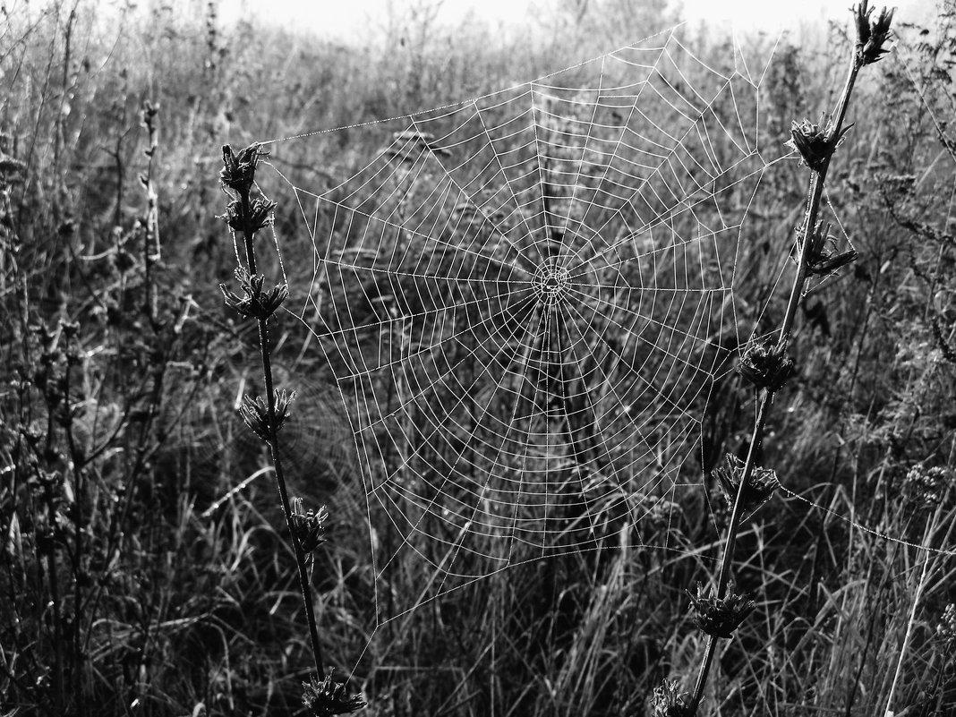 Ловчья сеть - анатолий томас