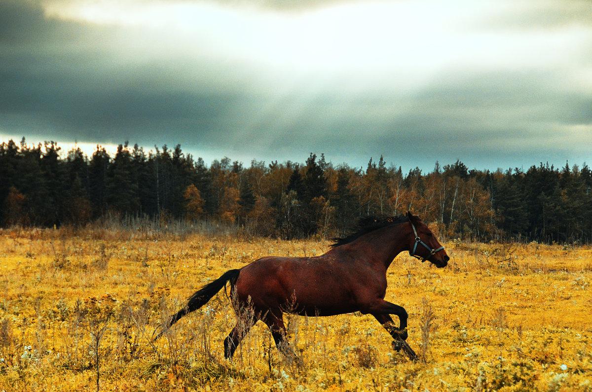 Несущаяся осень - Анастасия Рыжова