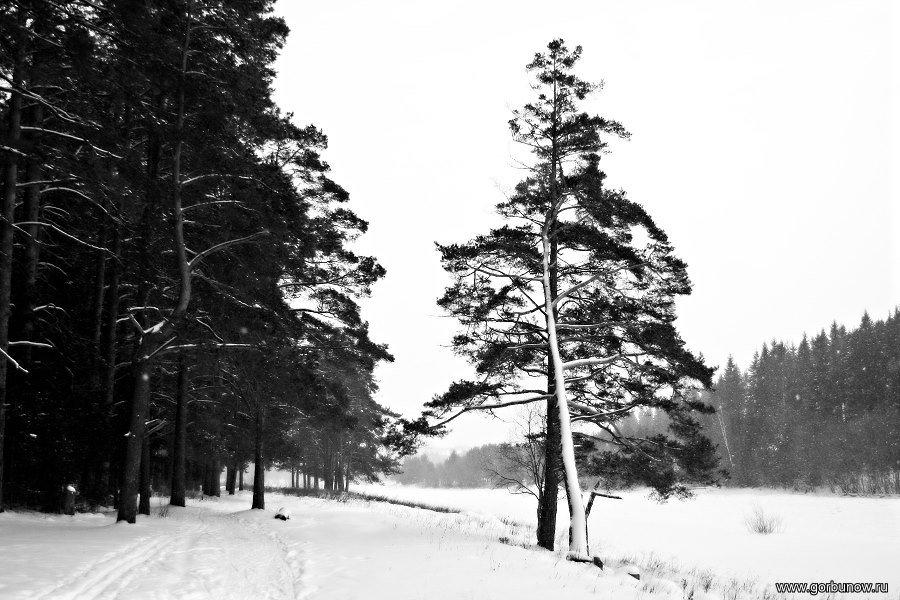 Зима-зима - Александр Горбунов