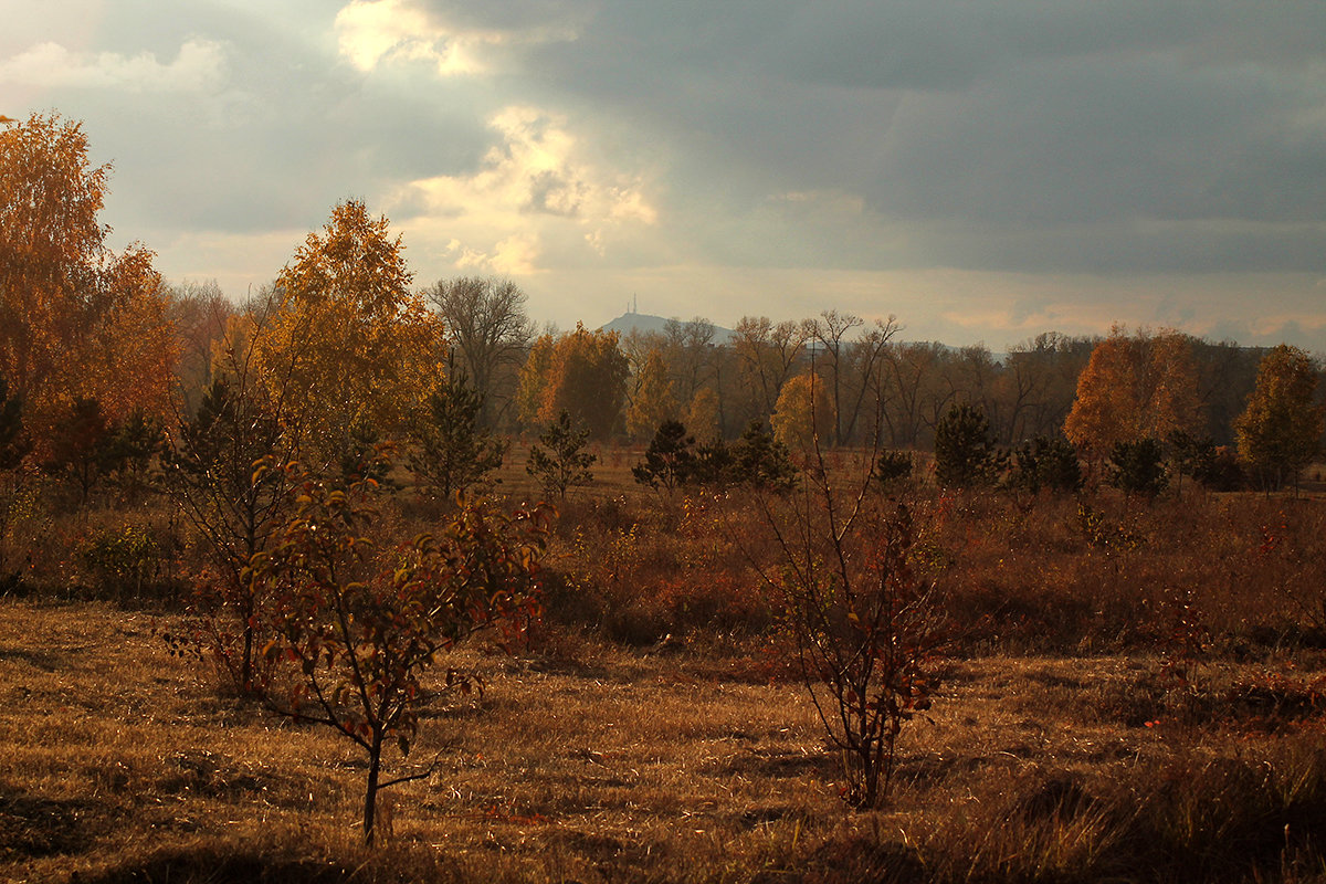 Девятое октября - Екатерина Торганская