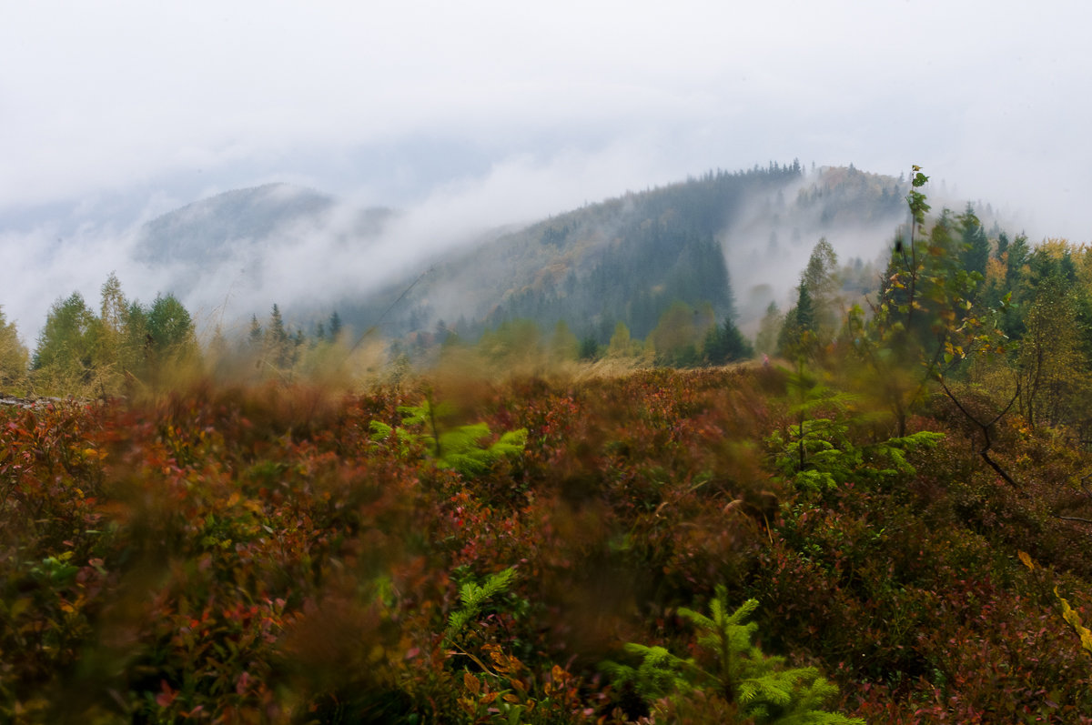 Мокрый октябрь на горе Ягодной - Александр Крупский