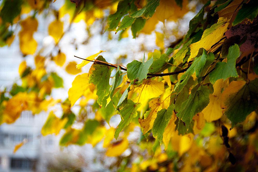 Осень - Сергей Афанасьев