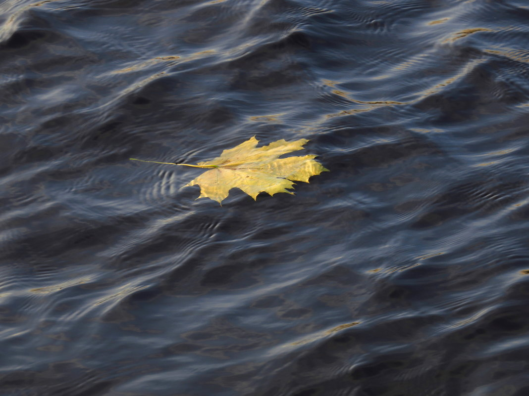 Первое и последнее плавание - Андрей Лукьянов