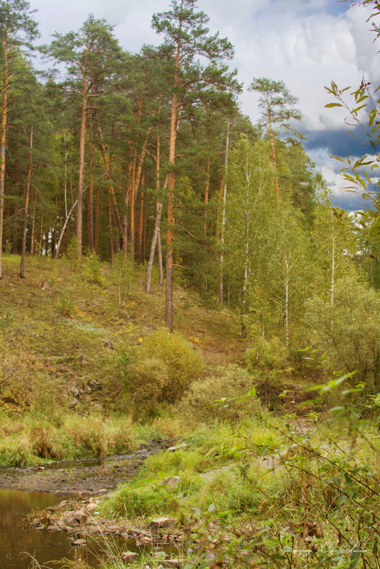 лес - олег