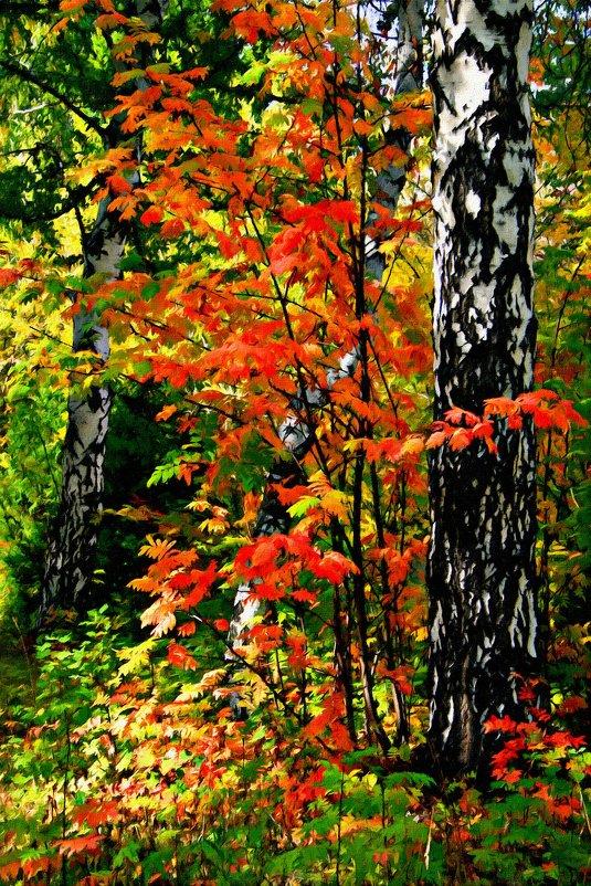На палитре осень смешивала краски ... - Евгений Юрков