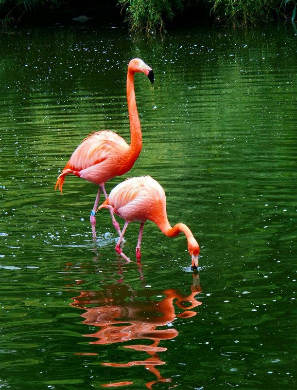 Карибские фламинго - Николай Ярёменко