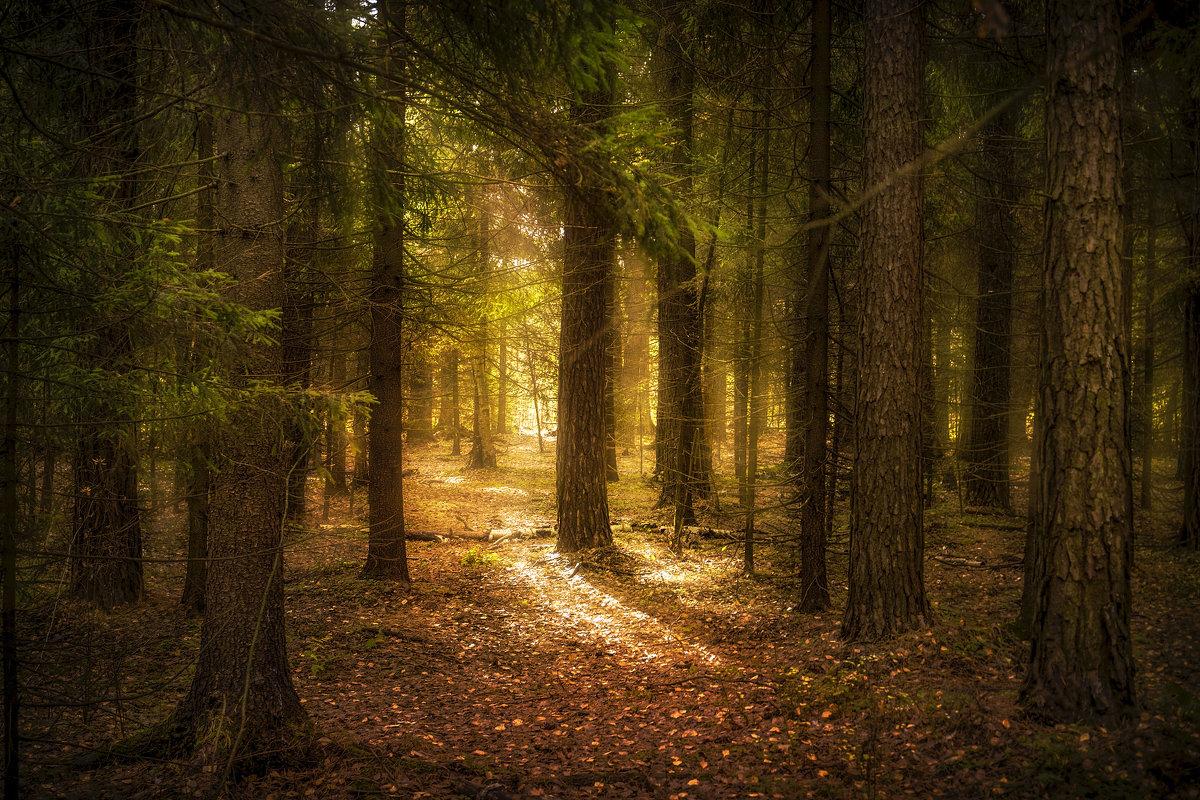 Утро в лесу - Алексей Строганов