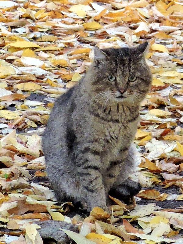 Осенний кот - Александр Поздеев