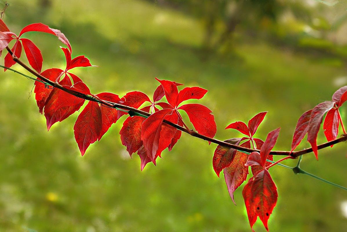 целовала листья Осень... - Lena