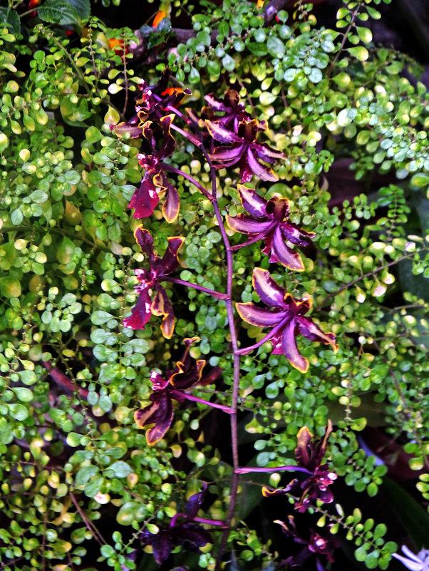 Орхидея - татьяна петракова