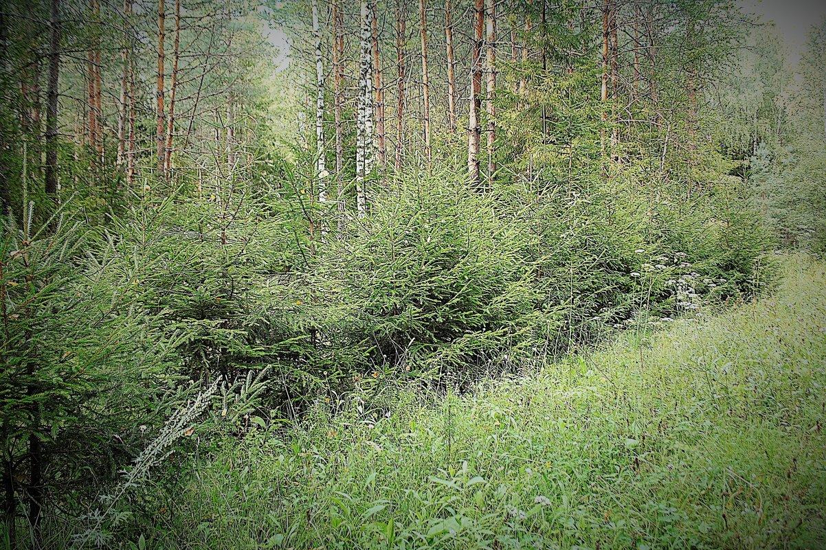 Ёлки зелёные - Николай Масляев