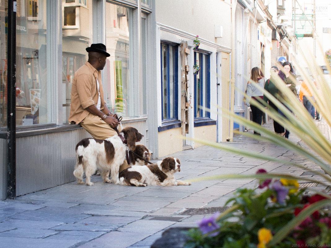 Три собаки - Арвидс Гурскис