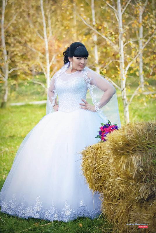 Свадьба Елены и Дмитрия - Андрей Молчанов