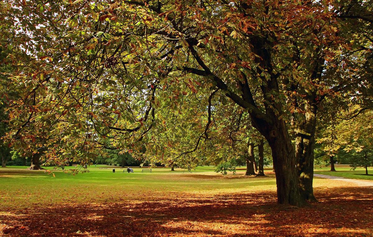 Порыжело в парке - Alexander