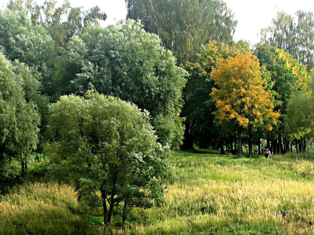 В парке летом - Елена Семигина