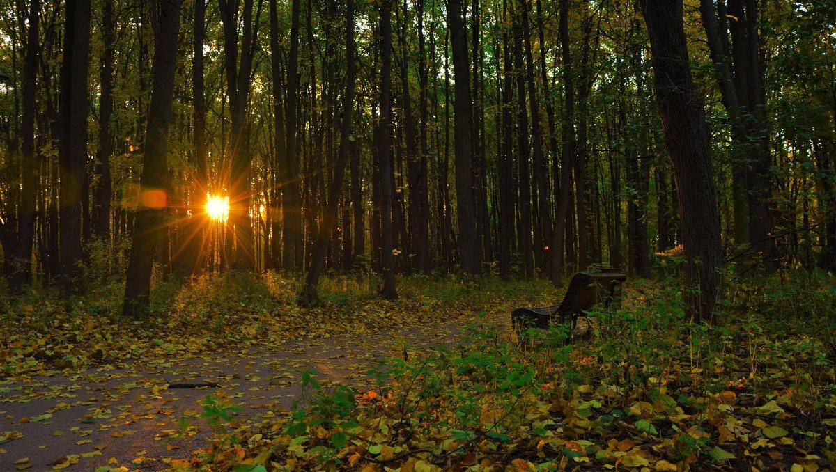 Осенний парк - Владимир Вышегородцев