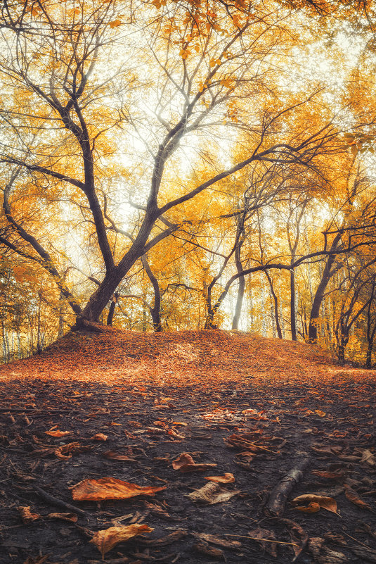 Осень - Егор Балясов