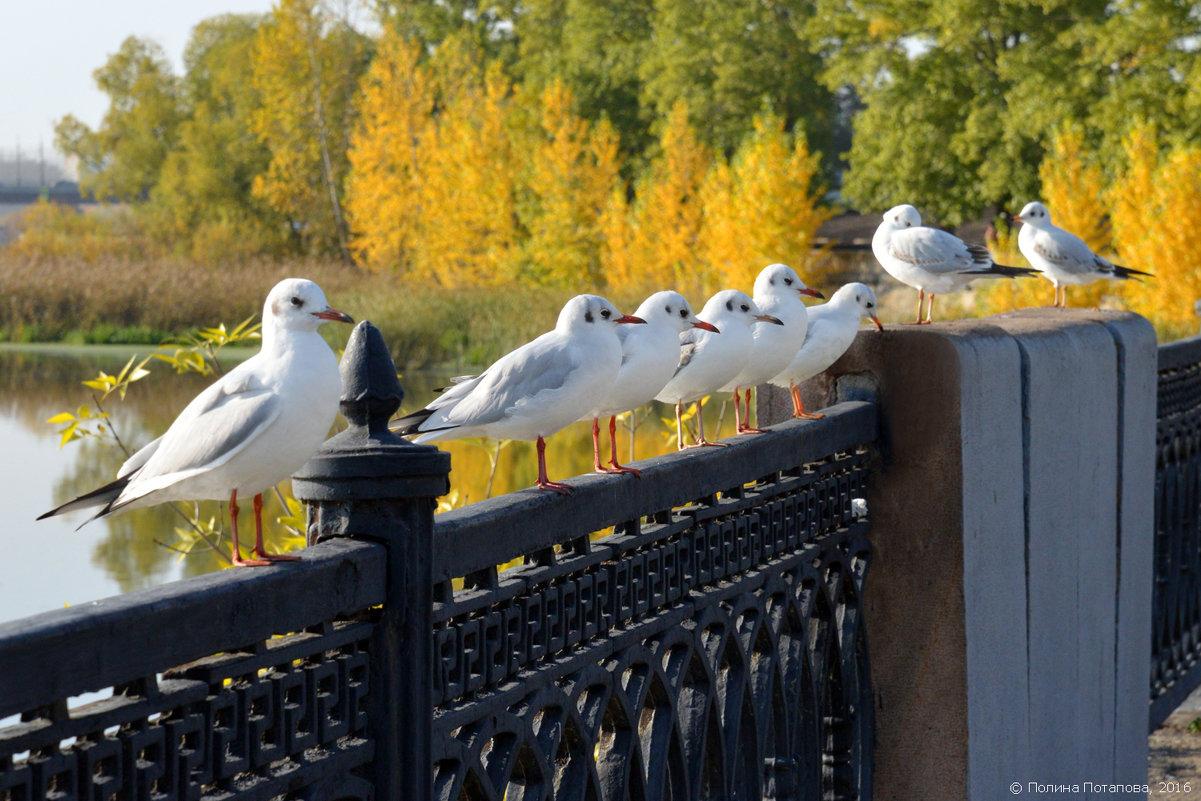 Октябрьский слёт - Полина Потапова