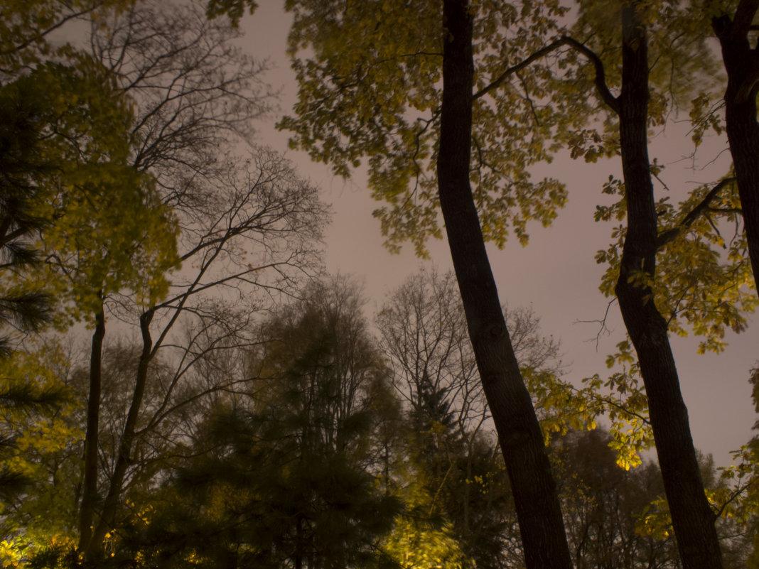 Октябрь в сете фонарей - Александр Зенченко