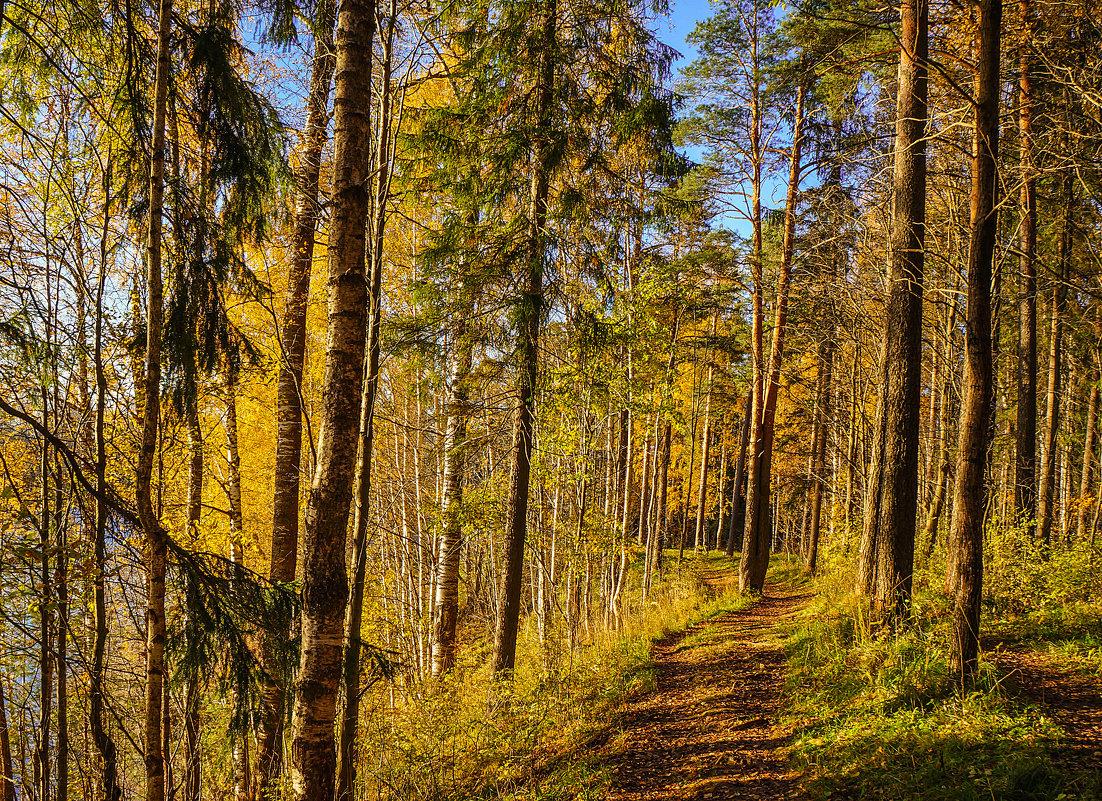 Тропинка в осеннем лесу - Анатолий