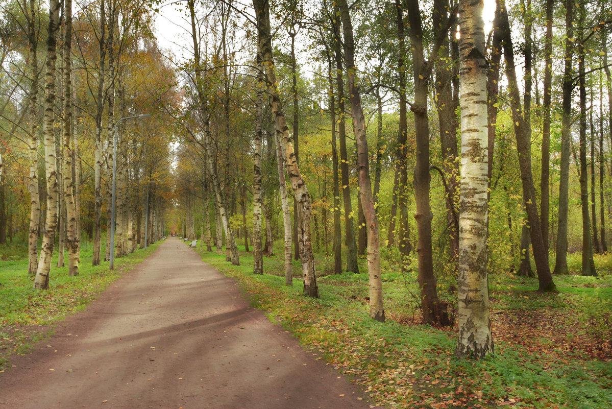 аллейка в парке - Наталия П