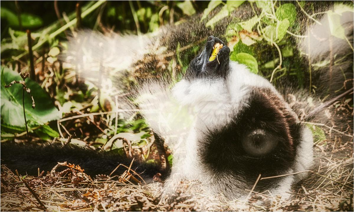 Два разных взгляда...Лемурляндия,Мадагаскар! - Александр Вивчарик