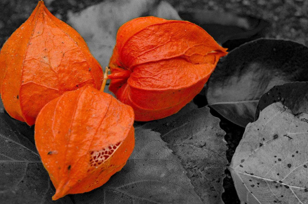 нотка оранжевого - Олег Лопухов