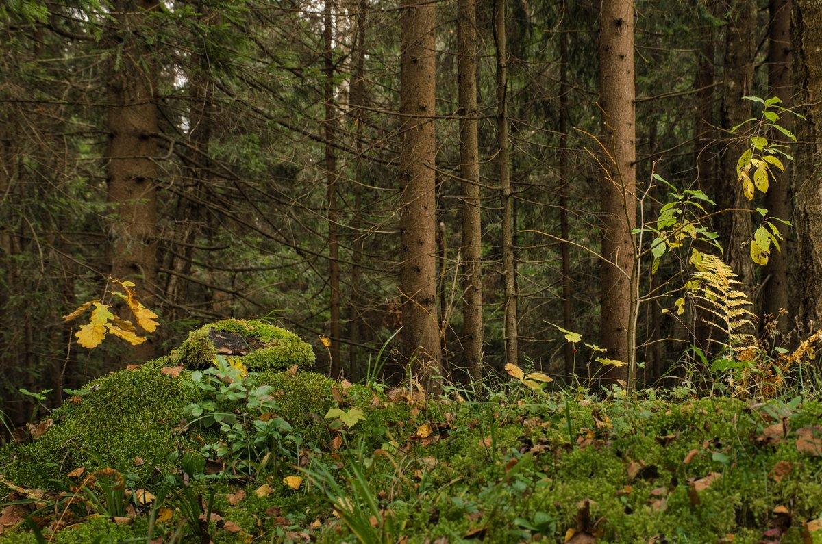 Лесные картинки ... - Va-Dim ...
