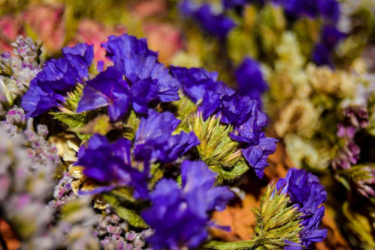 Серенивые цветики - Света Кондрашова