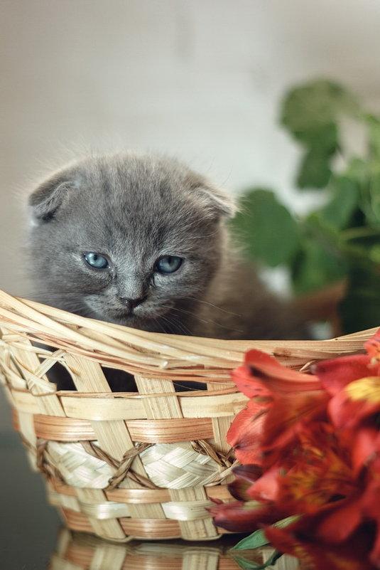 Котёночек - Алина Репко