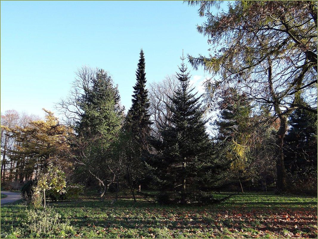 Ботанический сад - Вера