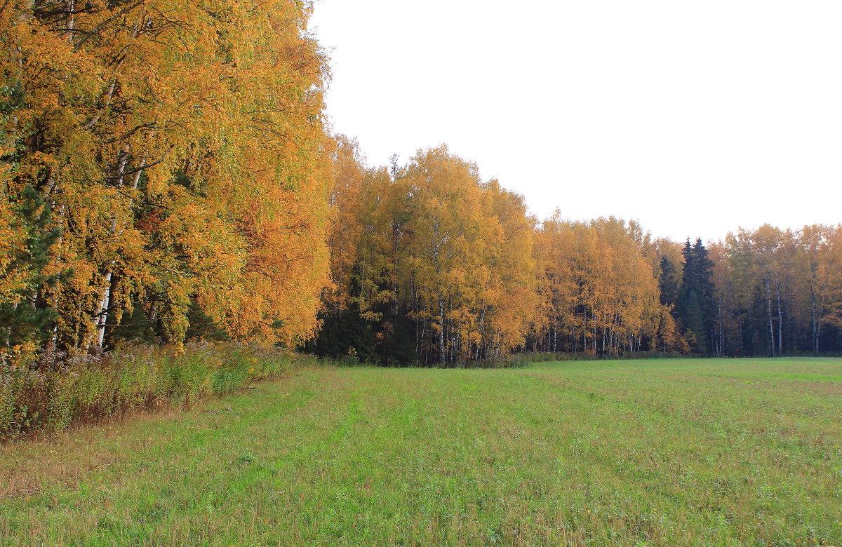 Картины октября - Татьяна Ломтева