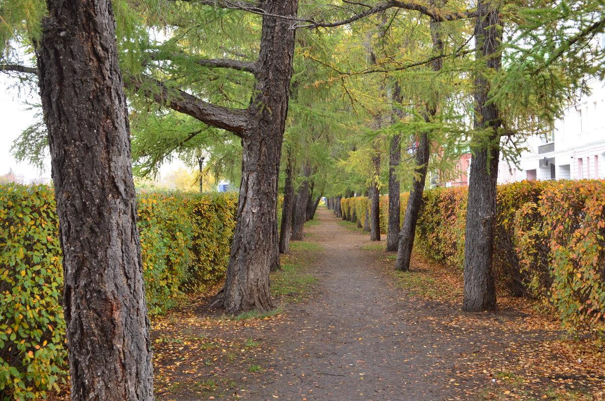 Осень - Таня Фиалка