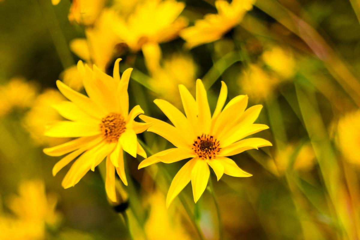 Цветок - vcherkun